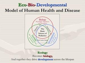 EcoBioDev-Model