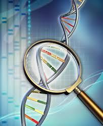 genom-01