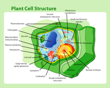visual-plant_cell_structure
