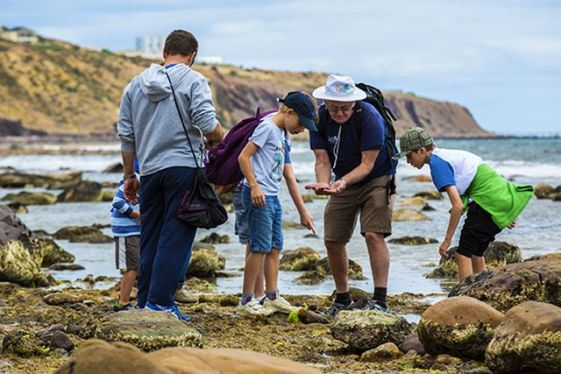 conectare-people-exploring-beach-bioblitz