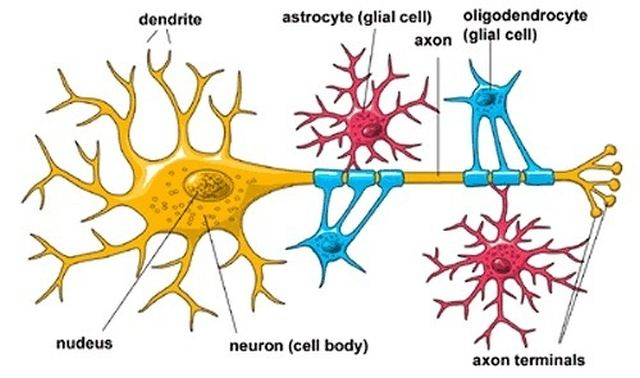 Brain-cells-structure