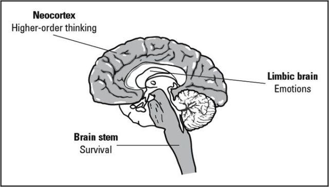 Neocortex-zone