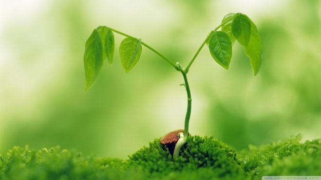 1-cresterea-plantelor-1
