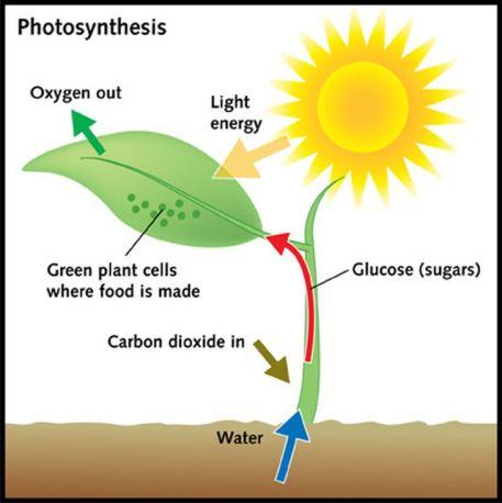 1-cresterea-plantelor-6