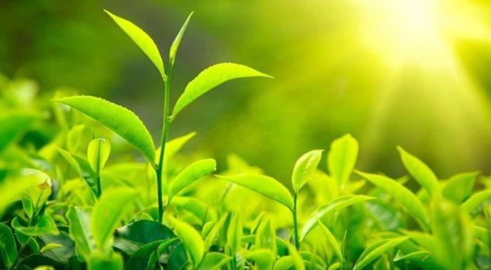 1-cresterea-plantelor-8