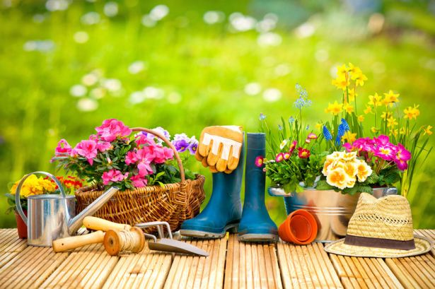 52913984 - gardening tools and flowers on the terrace in the garden