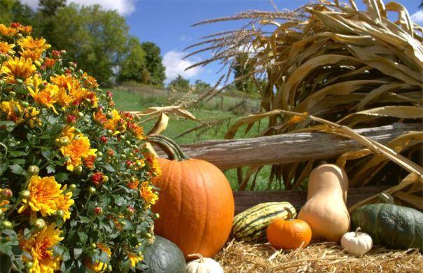 1-fall-colours-1