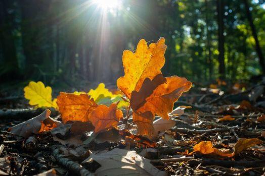 1-fall-colours-2