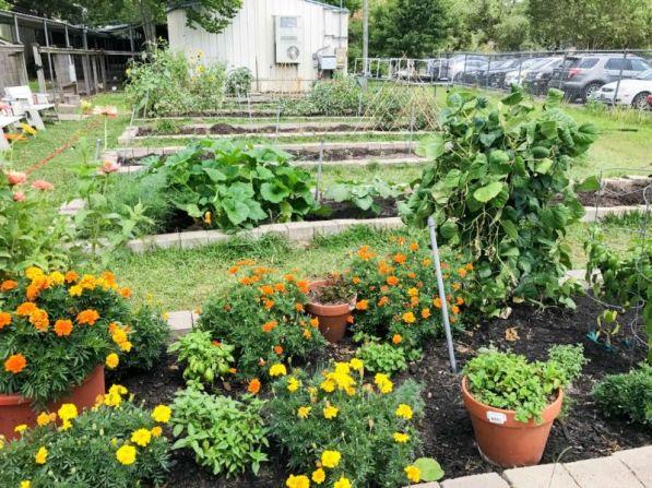 1-School-Gardens-3
