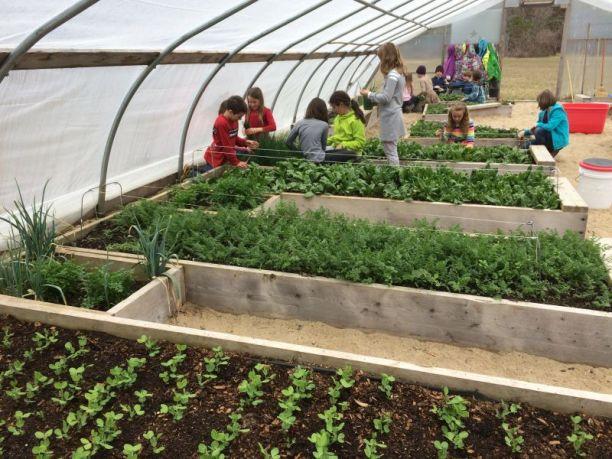 1-School-Gardens-8