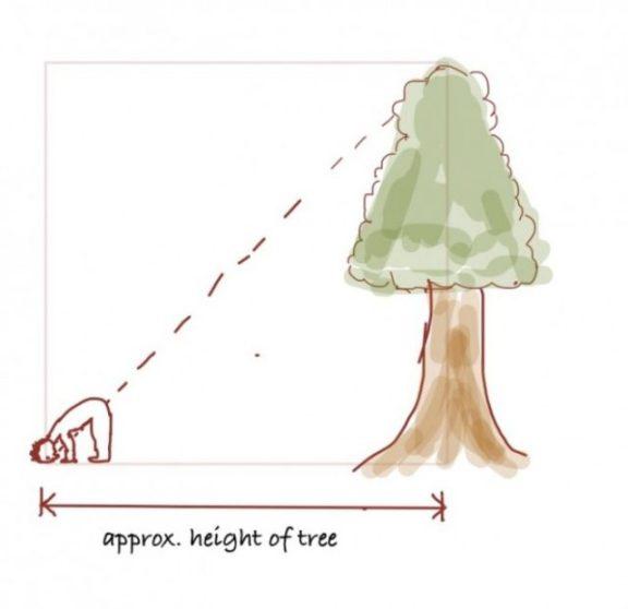 1-tree1